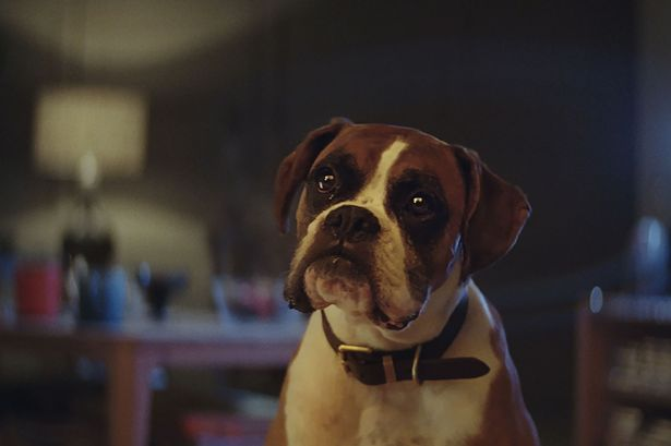 John Lewis Christmas advert 2016 Boxer