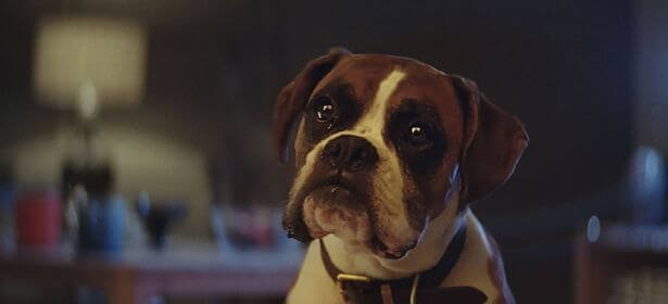 Christmas adverts: Which brands have had the best public response?